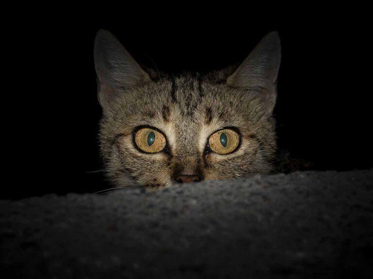 Frightened Kitten
